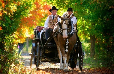 Wedding carriage at Stanley's Olde Maple Lane Farm in Embrun, Ontario